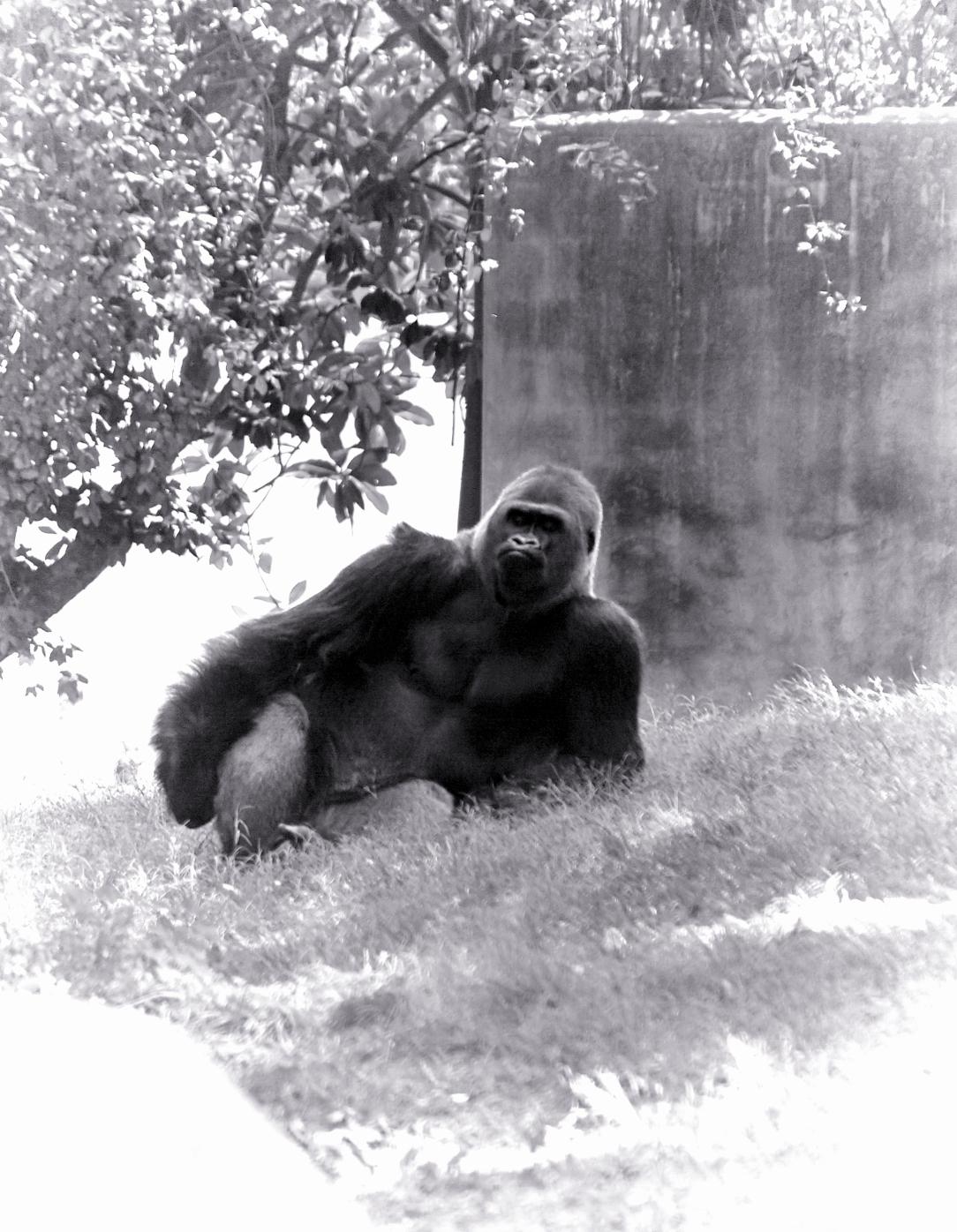 Atlanta Zoo 06201515-06-28115_DxOFP